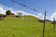 Barbed wire in front of a green pasture and blue skies. A lush beautiful morning out in Marin County. Light fluffy clouds line the background behind bright green Stock Photos