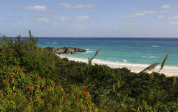 Lush Bermuda Shoreline Royalty Free Stock Photo