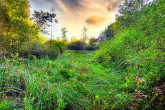 Lush bog. A photo of lush bog (HDR, made from tree different exposures, 1DsMarkII royalty free stock image