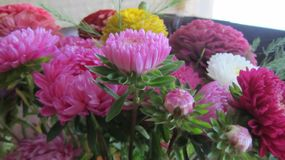 Bright, lush and fresh bouquet of asters. royalty free stock image