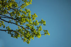 Lush branch against blue sky Stock Photo