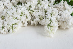 Lush bunches of white lilac Stock Photo