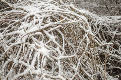 Lush bush. Covered with snow Royalty Free Stock Images