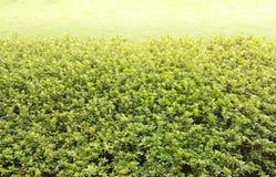 Lush bushes in garden Stock Photos
