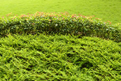 Lush bushes in garden Stock Images