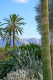 Lush cacti garden Royalty Free Stock Image