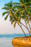 Lush coconut palms on the shore of the Ocean Royalty Free Stock Photography