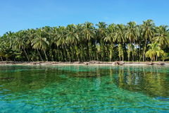 Lush coconut trees with epiphyte on tropical shore Royalty Free Stock Photos