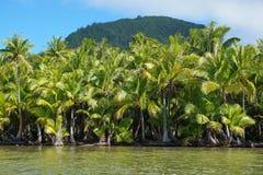 Lush coconut trees on the shore French polynesia Royalty Free Stock Photos