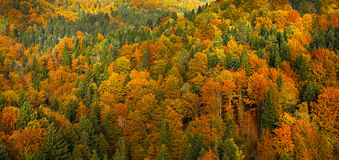 Lush, Colorful Autumn Forest Landscape, Aerial View Stock Photo