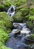 A lush creek Stock Image