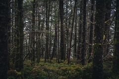 Lush dark forest. Image of a lush dark forest Royalty Free Stock Photos