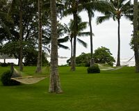 A lush empty lawn with palm trees and hammocks. An empty resort scene with lush green grass, empty hammocks, and lots of palm trees, with the ocean waves in the stock image