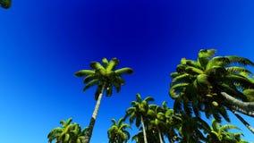 Lush exotic vegetation in tropical jungle. Lush exotic vegetation in jungle stock video footage