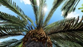 Lush exotic vegetation in tropical jungle. Lush exotic vegetation in jungle royalty free illustration