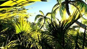 Lush exotic vegetation in tropical jungle. Lush exotic vegetation in jungle stock video