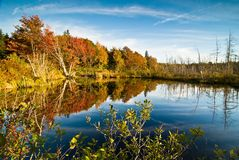 Lush fall foliage reflection Stock Photography