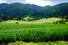 Lush Farmland Royalty Free Stock Photography