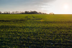 Lush farmland Royalty Free Stock Photography