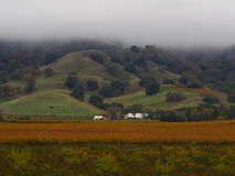 Misty Rolling Hills royalty free stock photo