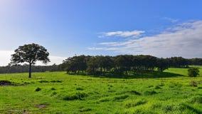 Lush field landscape in Western Australia Stock Image