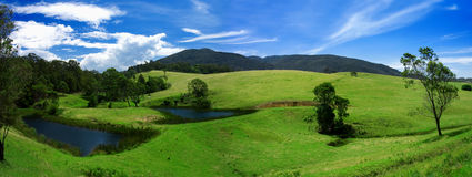 Lush Field Panorama Royalty Free Stock Photo