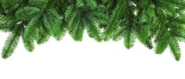 Lush fir twigs on white Royalty Free Stock Images