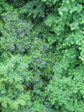 Lush foliage. In the Smoky Mountains in southeastern USA Stock Images