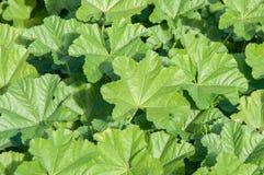 Lush Foliage Royalty Free Stock Image