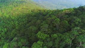 Lush foliage Forest trees panoramic aerial view