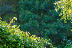 Lush foliage. Green leaves and plants with white flowers Royalty Free Stock Photos