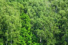 Lush foliage of greenwood in sunny summer day. Above view of lush foliage of greenwood in sunny summer day royalty free stock image