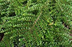 Lush foliage of growing bushes. Royalty Free Stock Photo