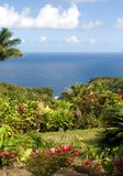 Lush foliage at a tropical gar Royalty Free Stock Images