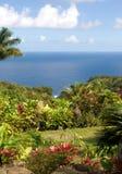 Lush foliage at a tropical gar. Den in Maui, Hawaii Royalty Free Stock Images