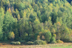 Lush fores landscape Stock Image