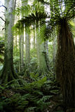 Lush forest Stock Image