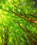 Lush forest Stock Images