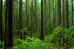 Lush Forest Royalty Free Stock Photography