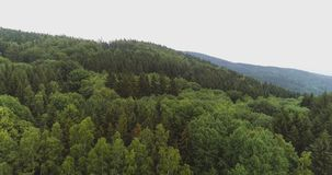Lush forest against sky. Drone view of lush forest against sky stock video