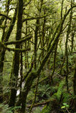 Lush forest along the Kepler Track Royalty Free Stock Photography