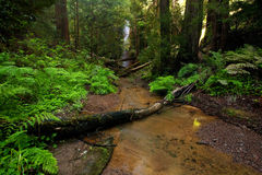 Lush Forest Creek Royalty Free Stock Photo