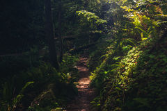 Lush forest hiking path. Royalty Free Stock Images
