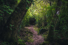 Lush forest hiking path. Royalty Free Stock Image