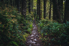 Lush forest hiking path. Royalty Free Stock Photography