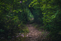Lush forest hiking path. Royalty Free Stock Photos