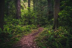 Lush forest hiking path. Stock Photos