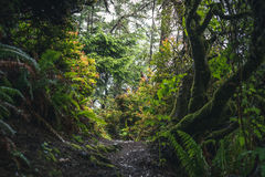 Lush forest hiking path. Royalty Free Stock Photo