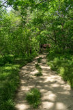 Lush forest with a hiking trail Stock Images