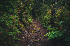 Lush forest path. Royalty Free Stock Photos